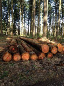 gestion forestiere 53