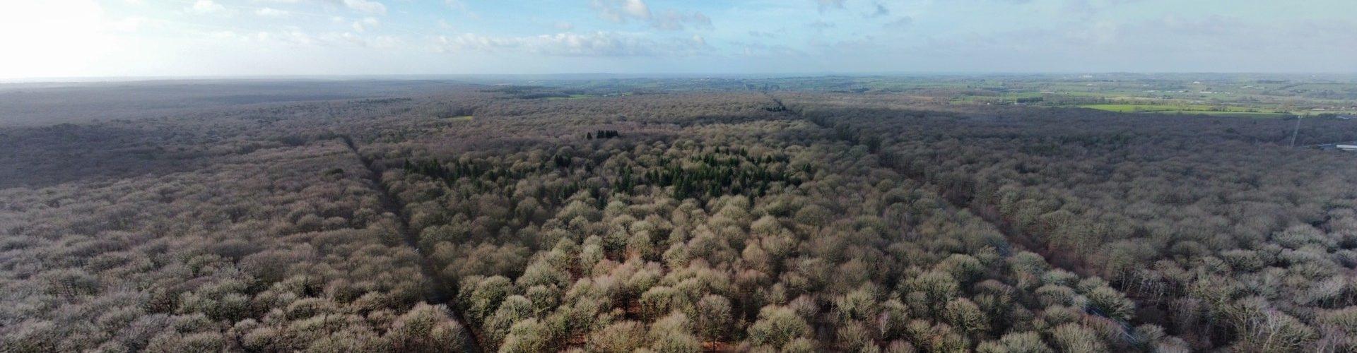 Forêt de Mayenne2