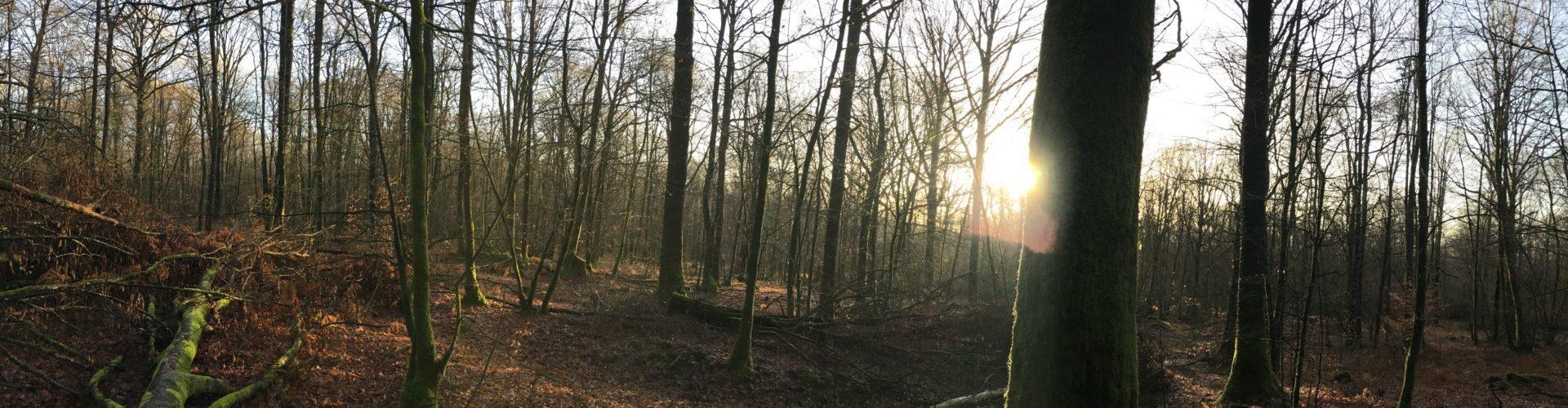 Panorama Forêt de Mayenne